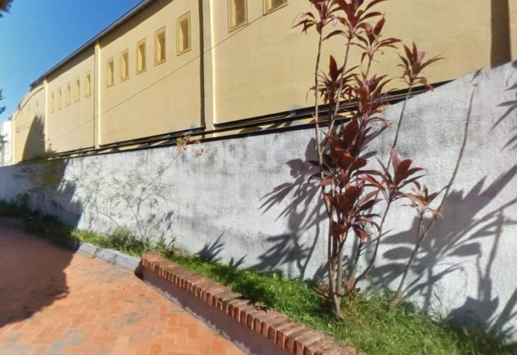 pared ant